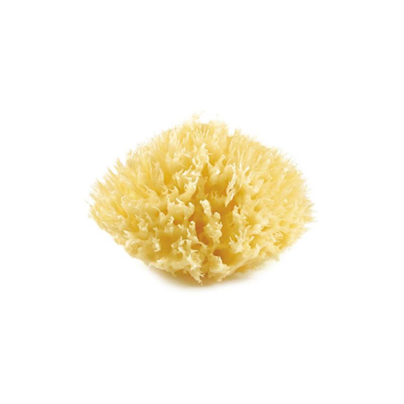 Mořská houba, Yellow